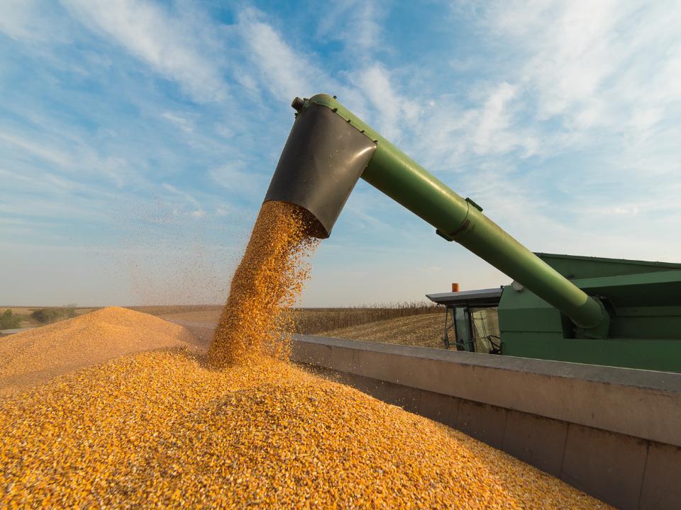 Pesquisa Viabiliza uso de Subproduto da Soja Como Ingrediente Para Alimentos Plant-Based